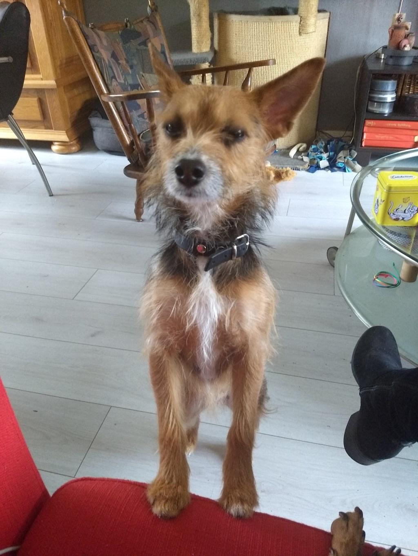 Hondje Sadie wordt vermist. Foto: PR Foto:  © Achterhoek Nieuws b.v.