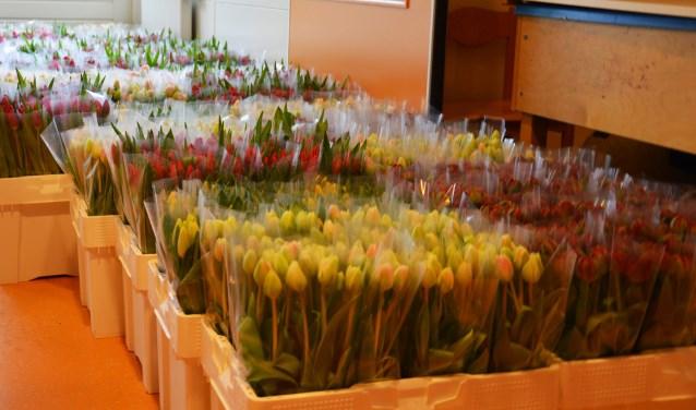 De verkochte tulpen werden zaterdag bezorgd. Foto: PR