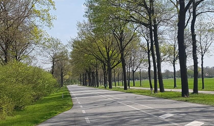 343 van de karakteristieke bomen langs de N319 worden mogelijk gekapt. Foto: Kyra Broshuis