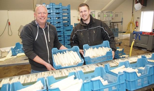 Groentekwekers Gert Smits en zijn zoon Edwin met het 'witte goud'. Foto: Frank Vinkenvleugel