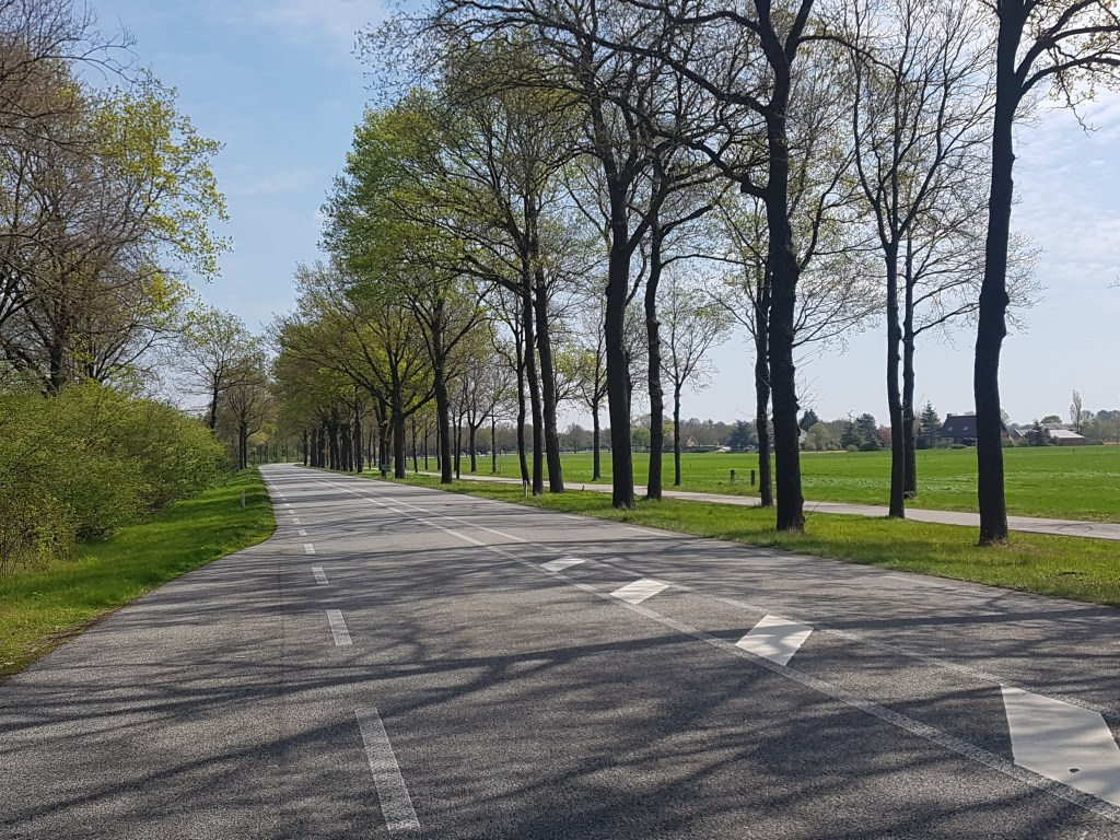 343 van de karakteristieke bomen langs de N319 worden mogelijk gekapt. Foto: Kyra Broshuis  © Achterhoek Nieuws b.v.