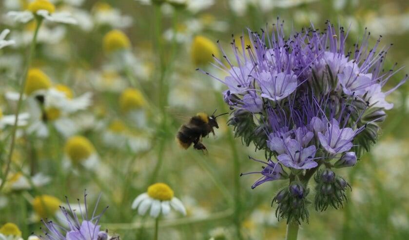Insecten, wij kunnen niet zonder. Foto: PR!