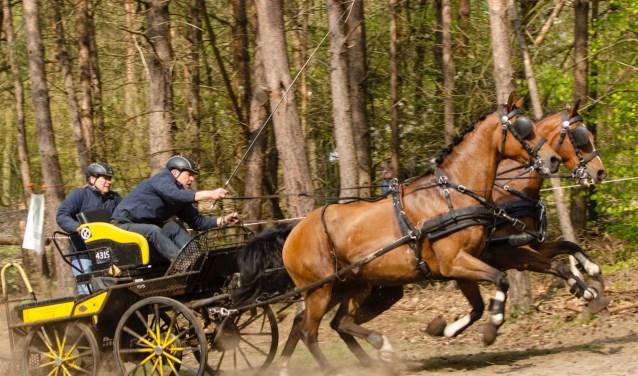 Jan Broeze won de rubriek tweespan paarden klasse L.Foto: Gerben Olthof