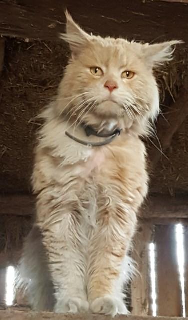 De op de Leemhorstdijk gevonden kat. Foto: PR