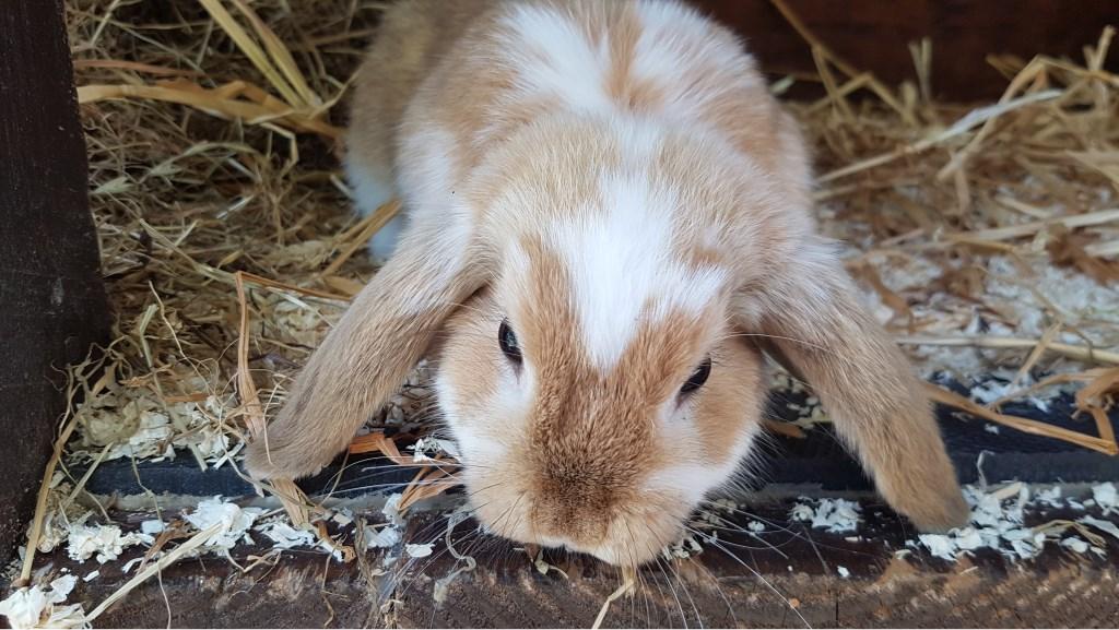 Het gevonden konijntje. Foto: PR  © Achterhoek Nieuws b.v.