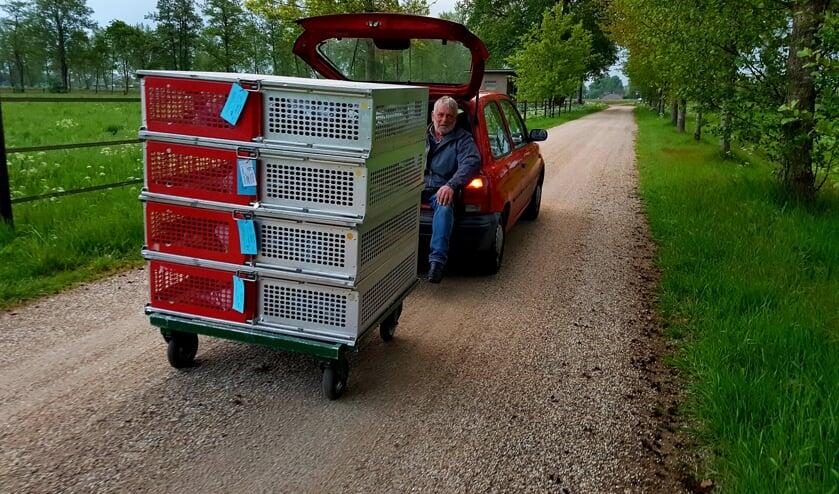 Leo te Stroet vervoert op eigen wijze de duiven naar de vrachtwagen. Foto: Robert Borneman