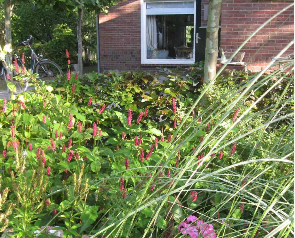 De tuin van de familie Vreeman-Legters. Foto: Kristie Legters Foto: Kristie Legters © Achterhoek Nieuws b.v.