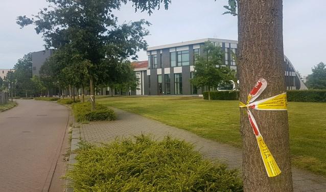 Ook elders in Doetinchem is er weer overlast door de eikenprocessierupsen. Foto: Burry van den Brink