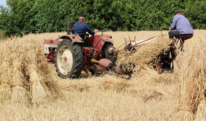 Rogge maaien zoals vroeger. Foto: Betsy Maatkamp
