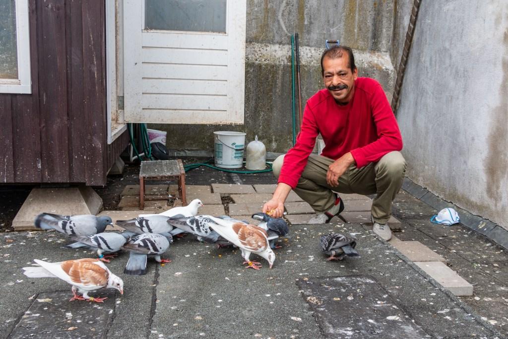 Wanneer duivenverzorger Hamid zijn vaste deuntje fluit vliegen de duiven meteen naar hem toe. Foto: Henk Derksen  © Achterhoek Nieuws b.v.
