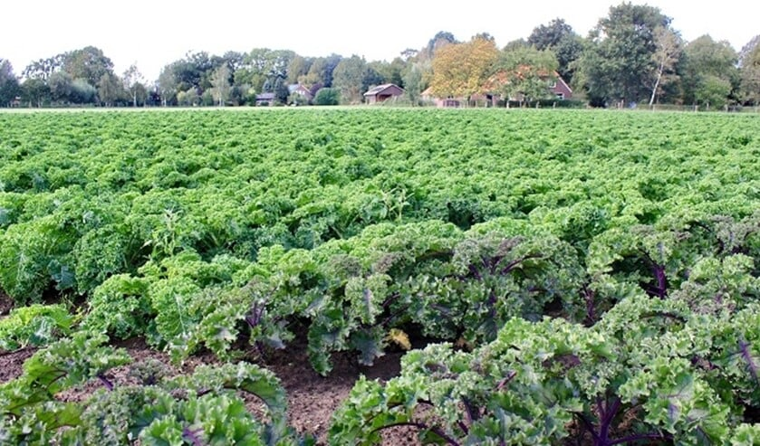 Smaken en groenten van Achterhoekse bodem staan centraal, zoals deze boerenkool van Smits uit De Heurne. Foto: PR