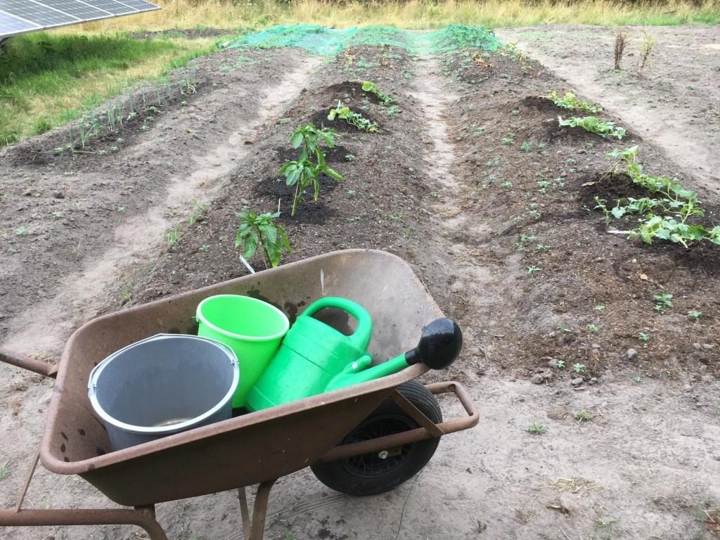 Met kruiwagen, emmers en gieters werden de gewassen van water voorzien. Foto: Hillie Bakker  © Achterhoek Nieuws b.v.