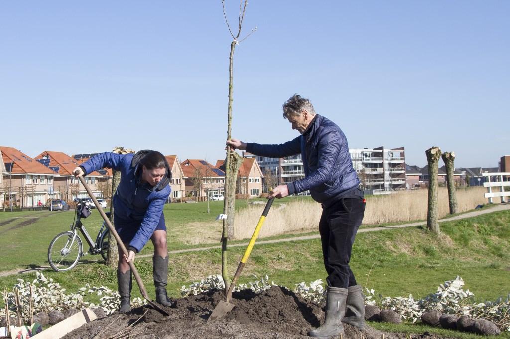 Wethouder Anke Vink-Hartog assisteert Nico Brantjes met de aanplant  © Uitkijkpost Media Bv.