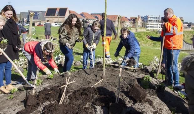 7a leerlingen van basisschool Kornak  helpen met planten Foto's: Anita Webbe