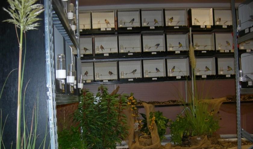 De leden van de vogelvereniging tonen hun vogels in een prachtige tentoonstelling.