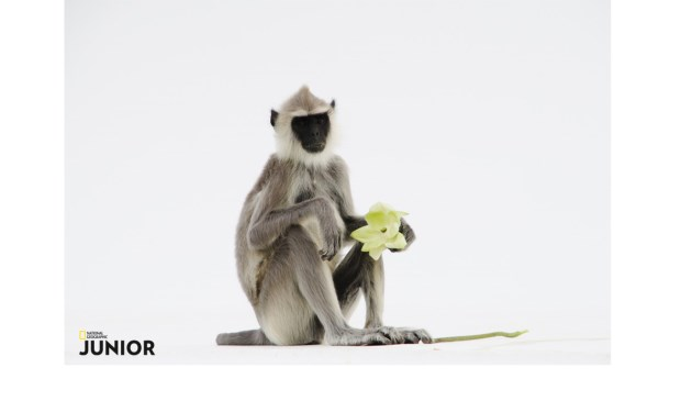De foto waarmee Sander meedoet aan de fotowedstrijd van National Geographic