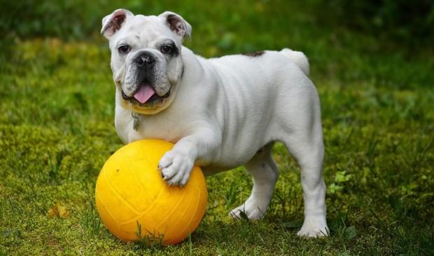 Komt er een hondentuin in Castricum?