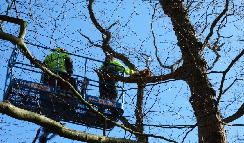 Dierenambulance medewerkster haalt Jaapie uit de boom