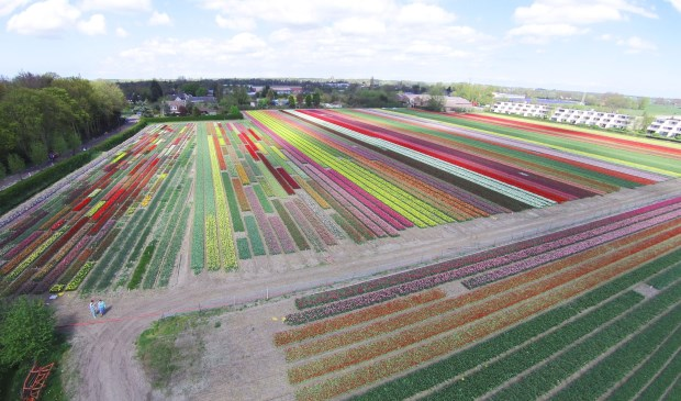 Bollenveld achter Holland Bulb Market