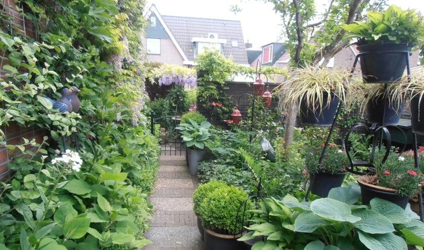 Veel moois te zien tijdens open tuinen weekend in Uitgeest