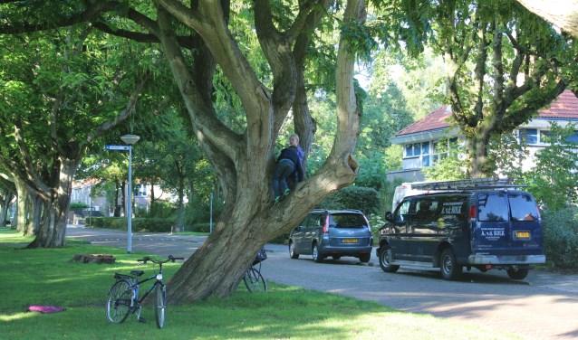 Bomen in de Willem de Zwijgerlaan