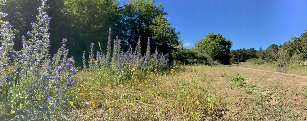 Door meer ruimte te creëren in het bos ontstaat er ruimte voor bloeiende planten, vlinders en insecten.