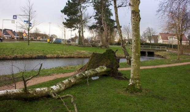 Januari 2018- bomen knakten als luciferhoutjes