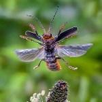 Vlieg mee in de wereld van de microkosmos