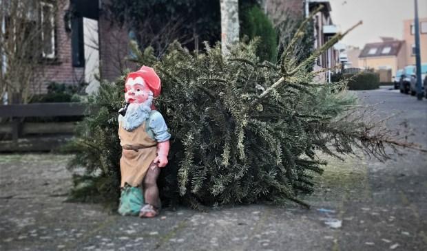 De afgedankte kerstbomen worden tot compost verwerkt. Dat geldt niet voor tuinkabouters.