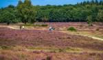 Het gevarieerde landschap is een belangrijke drager van de regio.