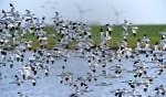 Stadsecoloog Ton Eggenhuizen vertelt over de vogeltrek.