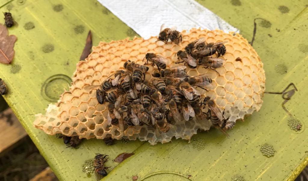 Muidernieuws Vreselijk De Bijen Zijn Gewoon Uit De Kast