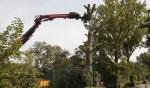 Een nieuwe ronde van de bomenkap is begonnen.