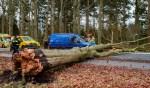 Op de Hilversumseweg was een boom op een rijdende auto gevallen.