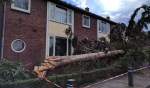 Aan het Singel zorgde een omvallende boom voor schade aan het dak van de buren.