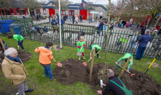 Wethouder Gerrit Pas kijkt toe hoe de leerlingen de bomen planten net buiten het schoolplein.