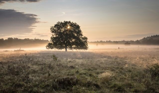 Natuur- en landschapsfotograaf Lemmens, ook bekend van de film 'Holland, natuur in de Delta', legde de hei op deze manier vast.