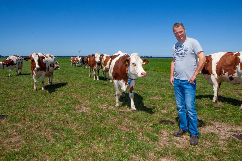 Bert Majoor tussen zijn roodbonte Montbéliarde koeien, een sterk ras uit de Franse Jura.