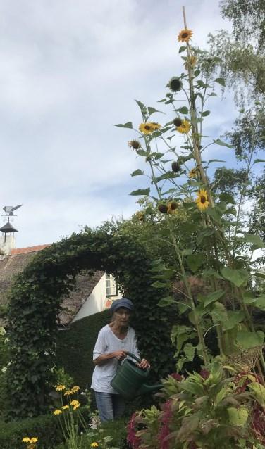 Annemarie Bitter bij haar zonnebloemen.