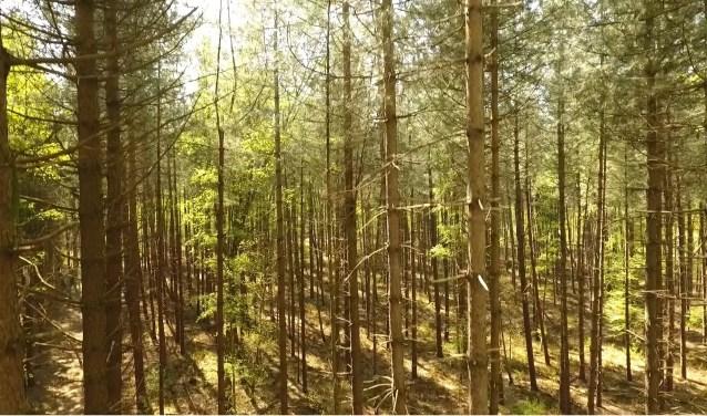 Een screenshot uit het filmpje dat Roy Visser met zijn drone maakte van de nieuwe bossen.