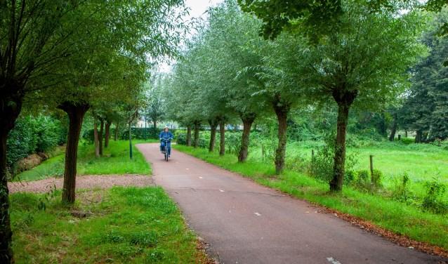 Er komen extra wilgen langs dit pad.