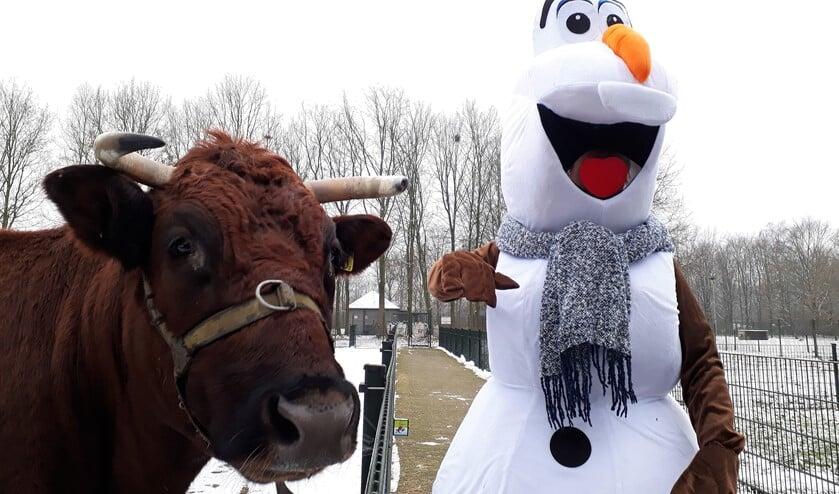Olaf uit Frozen is ook van de partij tijdens het winterfeest!