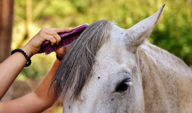 Genieten van een dagje tussen de pony's.