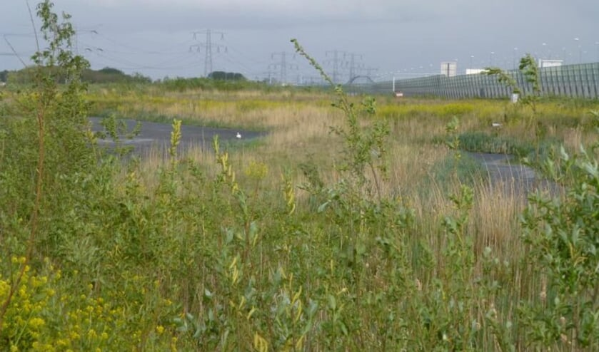 De Waterlandtak moet net als het Naardermeer uit moeras en droge en natte ruigte gaan bestaan.