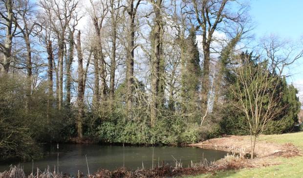 Op Sandwijck staan veel bijzondere boomsoorten, die goed aan hun silhouet zijn te herkennen