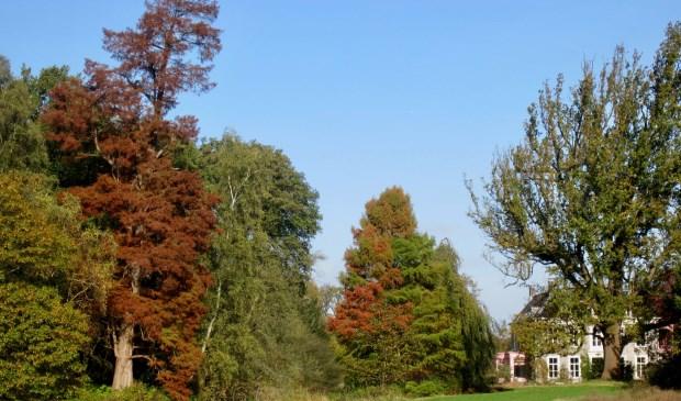 Sandwijck toont zijn herfsttooi.