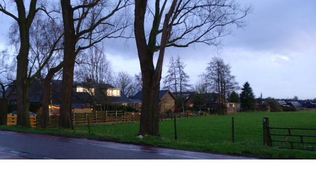 Een aantal van de in totaal 9 bomen langs de Westbroekse Kerkdijk die zullen worden verwijderd en op welke plaats herplanting plaats zal vinden.