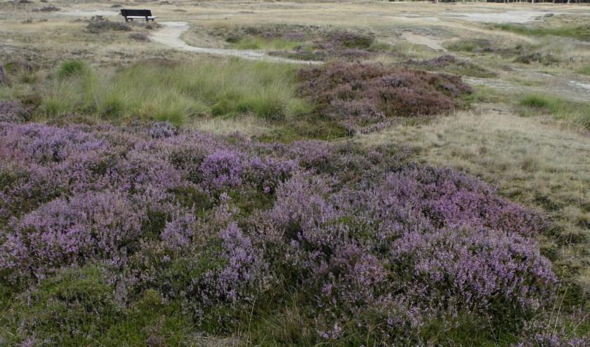 De uitgestrekte heidevelden op Landgoed Heidestein zijn indrukwekkend.