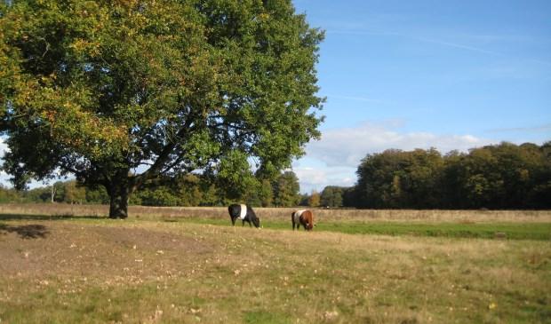 Zondag 4 november wordt een wandeltocht over Houdringe georganiseerd.