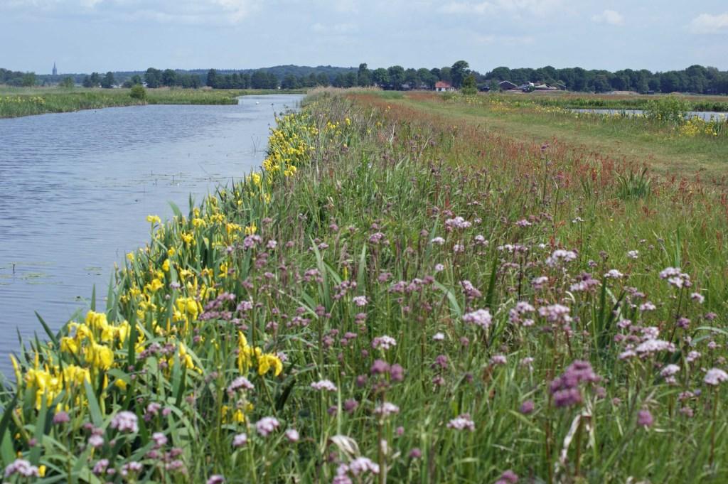 In het zoddengebied zijn unieke plantensoorten te vinden. (foto Bert van Dijk)  © De Vierklank